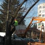 Премахват стари и опасни дървета в Севлиево