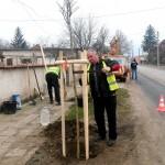 Засаждат 200 нови дръвчета в Севлиево