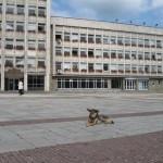Ухапана от бездомно куче осъди Общината