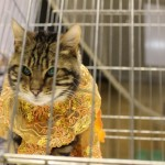 Котешкият карнавал отваря врати и за дребни домашни любимци