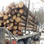 Хванаха камион с 10 кубика крадени дърва край Ганчовец