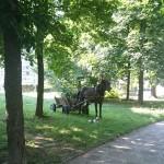 Коне, каруци и куче насред градски парк!