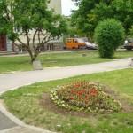 Засаждат 19 дървета в Габрово