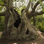 """Още две седмици за номинации в """"Дърво с корен 2015"""""""