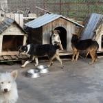 Мистерия в Севлиево! Пълнят нощем града с бездомни кучета?