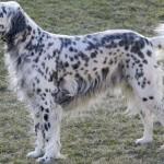 Жестокост: Гръмнаха домашно куче под носа на стопанина му!