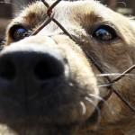 Изверг погуби живота на три кучета в центъра на Севлиево