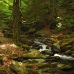Подобри гората в Седмицата на гората