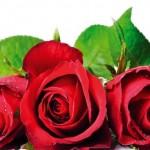 """От рози правят националния флаг на фестивала """"Семе българско"""""""