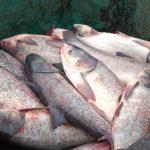 Дариха конфискувана риба на SOS детското селище в Трявна