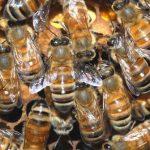 Важна информация за земеделските производители и пчеларите