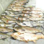 Засилени проверки на търговците на риба в Габрово преди Никулден