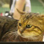 15 години Карнавал – ревю на котки