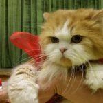 Карнавал-ревю на живи котки