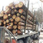 Засилват контрола по опазване на горските територии