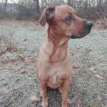 Помогнете: Търси се изгубено куче в Габрово! (снимки)