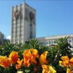 Засаждат 47 000 лалета в Габрово