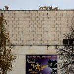 """""""Котки върху покрива"""" на Дома на хумора и сатирата"""